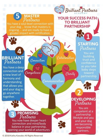 BPA-Success-Path-infographic-v27s-1100px